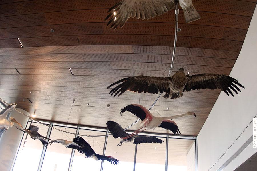 מוזיאון הטבע על שם שטיינהרדט,